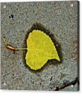 Spared Heart And Its All Yellow Acrylic Print