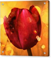 Sparkle Of The Tulip Acrylic Print by Cathie Tyler