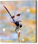 Sparkler Acrylic Print