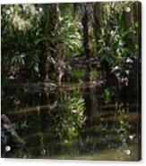 Sparkling Swamp Acrylic Print