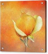 Sparkly Peach Rose Acrylic Print