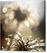 Sparkly Seedheads Acrylic Print