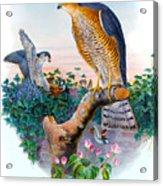 Sparrow Hawk Antique Bird Print Joseph Wolf Birds Of Great Britain  Acrylic Print
