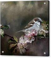 Sparrow In The Garden Acrylic Print