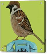 Sparrow Perched On Vintage Telephone Acrylic Print