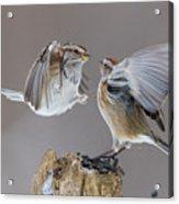 Sparrows Fight Acrylic Print
