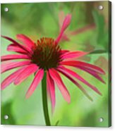 Spash Of Red Acrylic Print