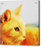 Special And Purfect Acrylic Print