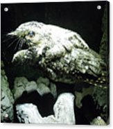 Special Bird Acrylic Print