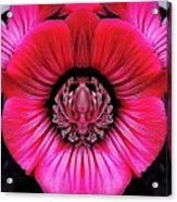 Special Flower Acrylic Print