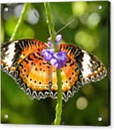 Speckled Butterfly Acrylic Print