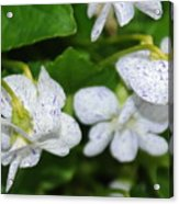 Speckled Flowers Acrylic Print