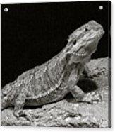 Speckled Iguana Lizard Acrylic Print