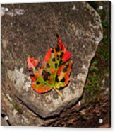 Speckled Leaf Acrylic Print