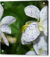 Speckled Wilflower Acrylic Print