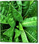 Spectacular Green Foliage Acrylic Print