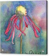 Spent Flower Acrylic Print