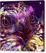 Sperber Raptor Plumage Bird Of Prey  Acrylic Print