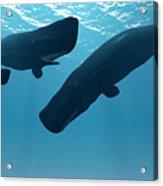 Sperm Whale Encounter Acrylic Print