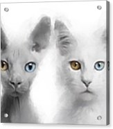 Sphynx And Main Coon Paint No 01 Acrylic Print