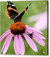 Spider And Butterfly On Cone Flower Acrylic Print