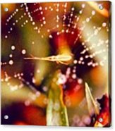 Spider And Spider Web Acrylic Print