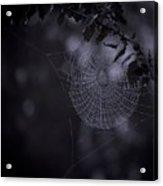Spider Art Acrylic Print