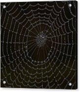 Spider Cobweb  Acrylic Print