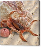 Spider Conch Shell On The Beach Acrylic Print