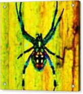 Spider Acrylic Print by Daniele Smith