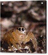 Spider Eyes Acrylic Print