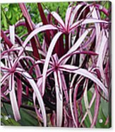 Spider Lily Acrylic Print