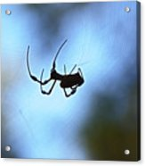 Spider Silhouette Acrylic Print
