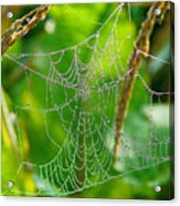 Spider Web Artwork Acrylic Print
