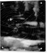 Spider Web Black White Acrylic Print