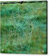 Spider Web In The Springtime Acrylic Print