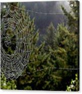 Spider Web Overlook Acrylic Print