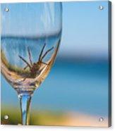 Spider Wine Acrylic Print