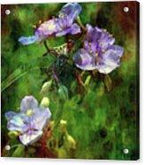 Spider Wort 0264 Idp_2 Acrylic Print