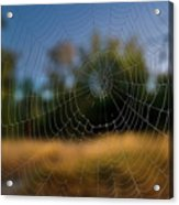 Spiderpane Window Acrylic Print