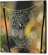 Spider's Creation Acrylic Print