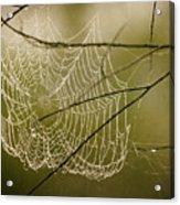 Spiders Web Acrylic Print