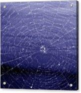Spiderweb Acrylic Print