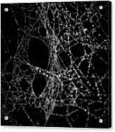 Spiderweb No 4 Acrylic Print