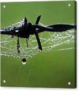 Spiderweb On Fencing Acrylic Print