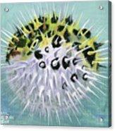 Spike Acrylic Print
