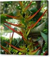 Spike Plants Acrylic Print