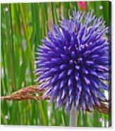 Spiky Blue Acrylic Print