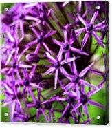 Spiky Acrylic Print