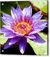 Spiky Sunshine Acrylic Print